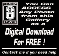 Digital Download-(FREE) If you need help, please contact us.
